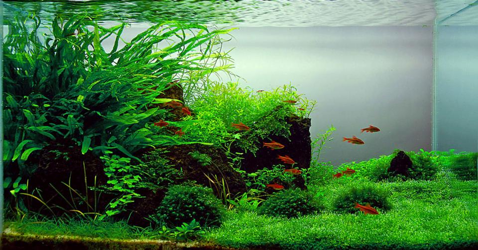 bể thủy sinh nước ngọt của tác giả davad zoltan