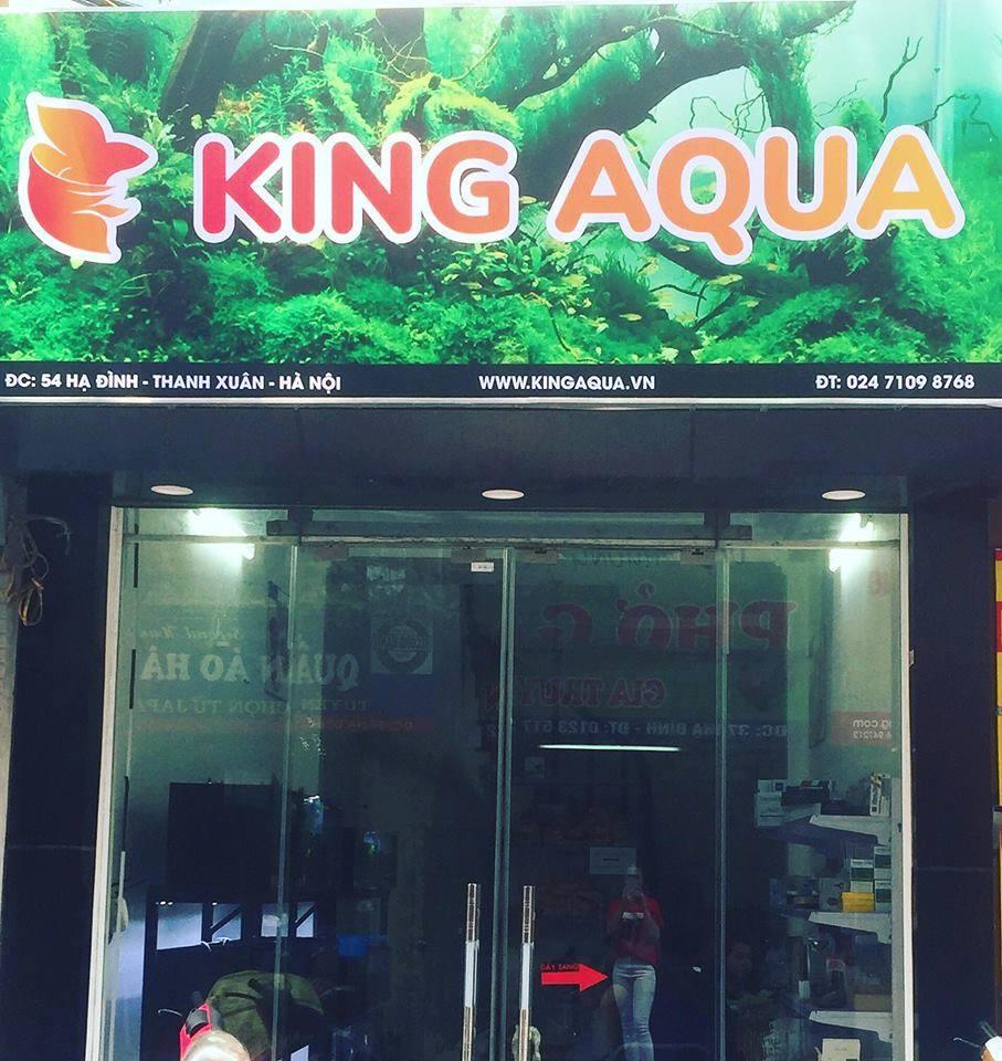 KingAqua