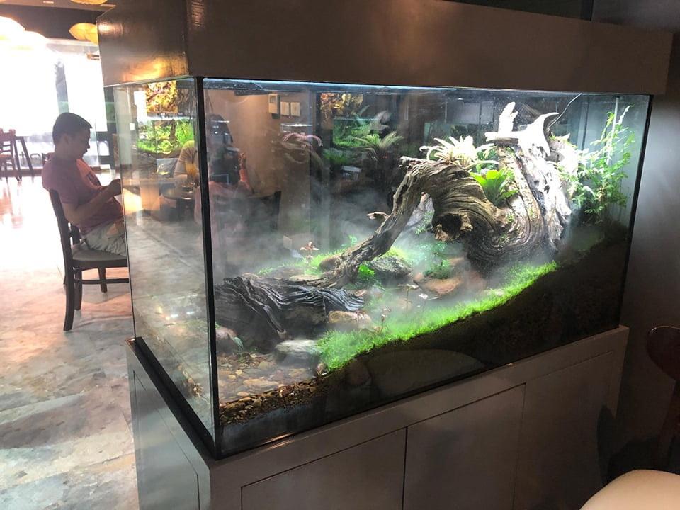 bể bán cạn tại quán cafe thủy sinh