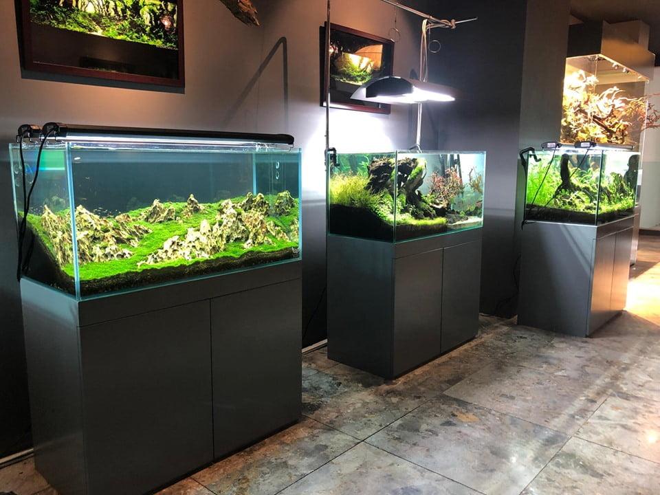 quán cafe thủy sinh cá cảnh