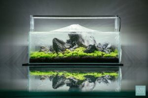 Bể thủy sinh trồng cạn
