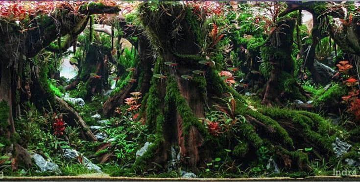 Bể cá thủy sinh layout rừng