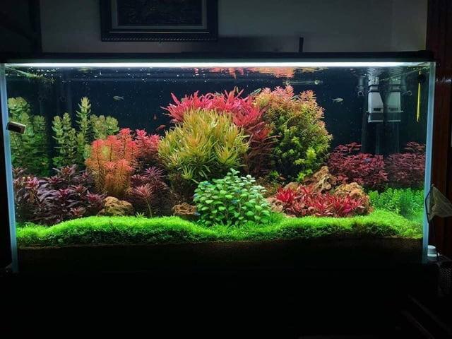 Bể thủy sinh phong cách hà lan