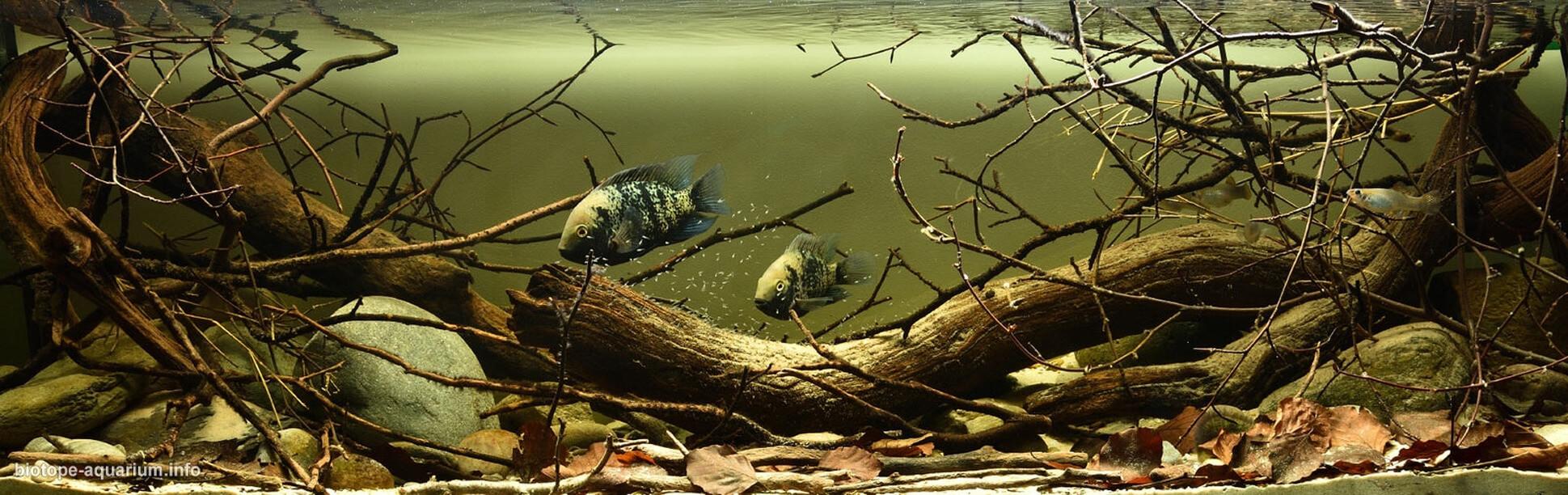 bể thủy sinh, cá cảnh biotope đẹp