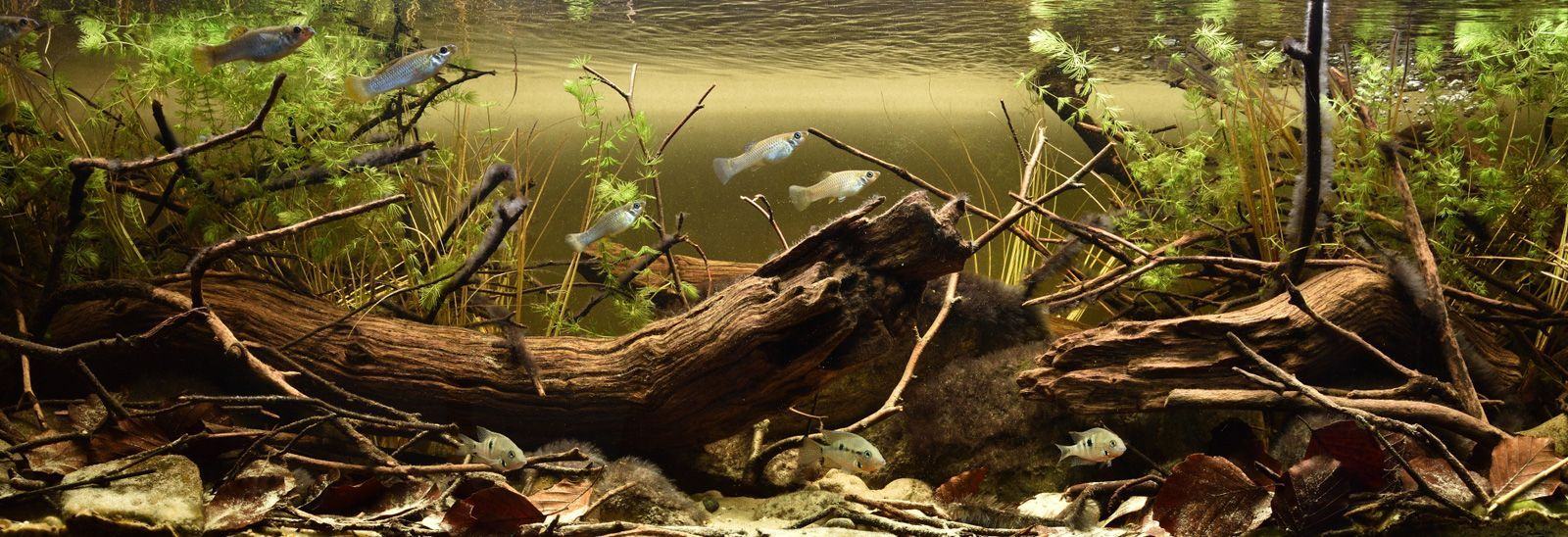Biotope layout đáy sông