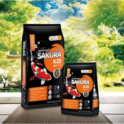 Cám sakura Koi