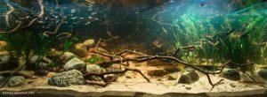 Bể thủy sinh Biotope
