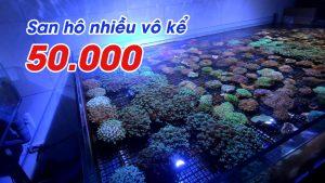 Thủy sinh nước mặn tại Hoàng Hoa Thám