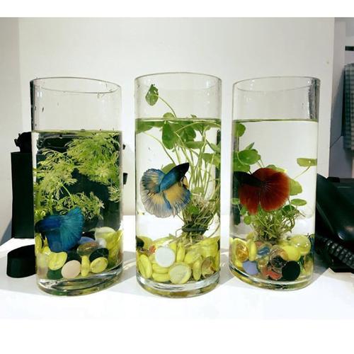 Bể cá mini hình trụ