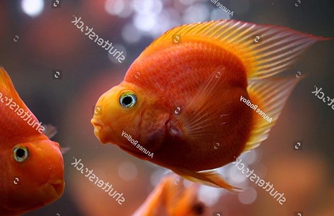 Cá Hồng Két Đẹp