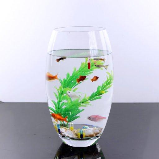 bể cá mini hình bầu dục