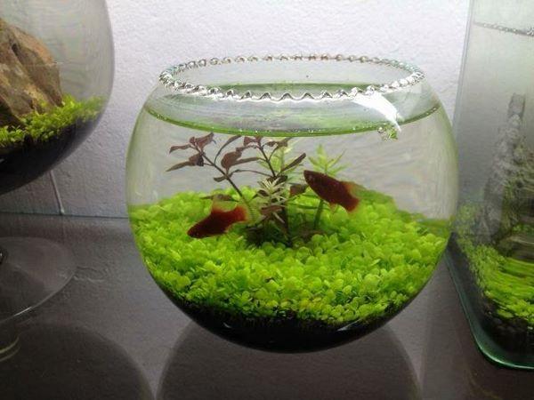 bể cá mini từ bình thủy tinh