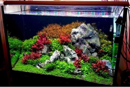 Bể thủy sinh cây lên màu đẹp