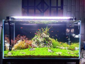 bể thủy sinh dài 120cm