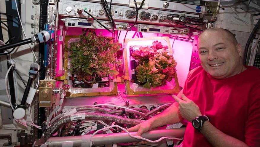 hình ảnh trồng cây trên trạm vũ trụ