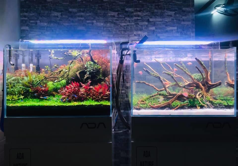Bể thủy sinh dùng đèn week raptor wrgb