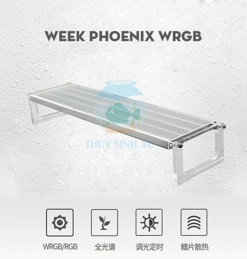 WEEK PHOENIX WRGB