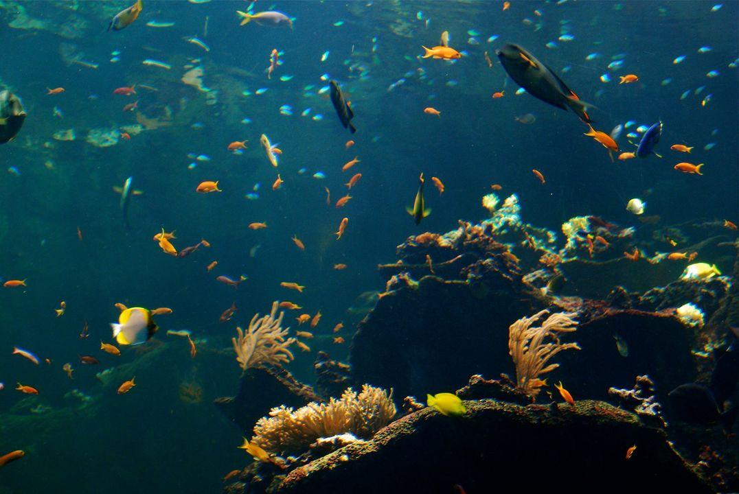 môi trường thủy sinh