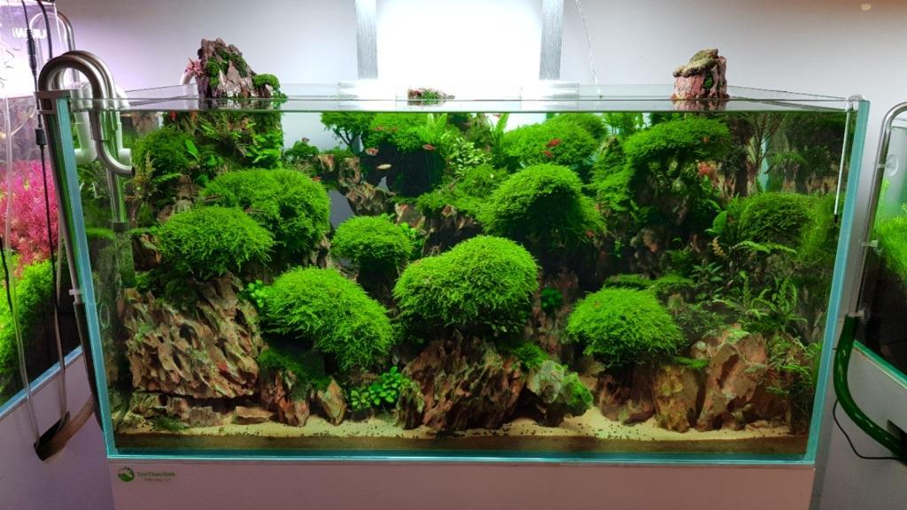 Rêu thủy sinh