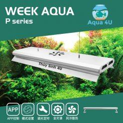 Week P series