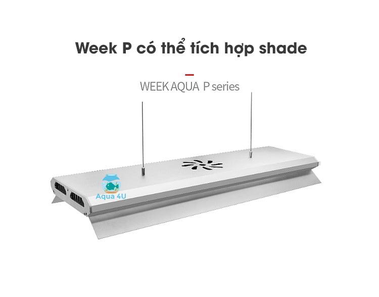 Week P series có tích hợp chắn sáng