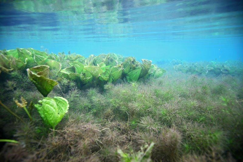 Tảo phát triển trong môi trường tự nhiên